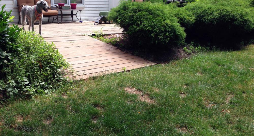How to build a backyard pathway
